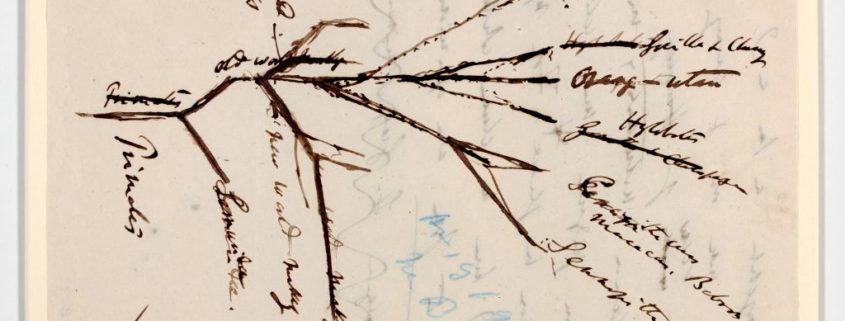 źródło: http://www.lib.cam.ac.uk/exhibitions/Babies/ascent.html